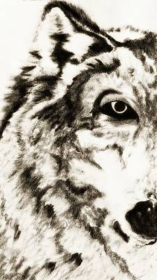 Drawing - Pencil Drawing Of Half Wolf Face By Ayasha Loya by Ayasha Loya