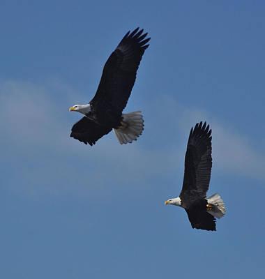 Halfwing Eagles Original