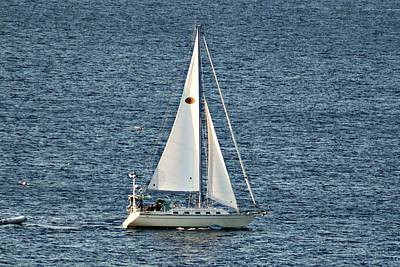 Photograph - Halibut Point Sailboat by Joe Faherty
