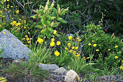 Photograph - Halibut Point Wildflowers by Joe Faherty
