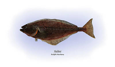 Halibut Art Print by Ralph Martens