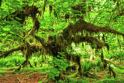 Photograph - Hall Of Mosses Horse by Spencer McDonald