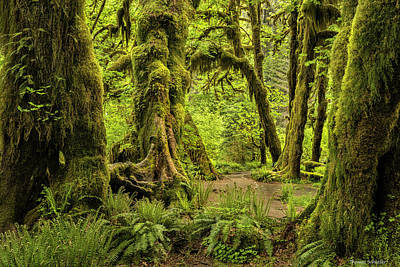 Photograph - Hall Of Mosses - Olympic National Park by Expressive Landscapes Fine Art Photography by Thom