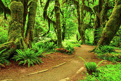 Photograph - Hall Of Mosses Trail by Spencer McDonald
