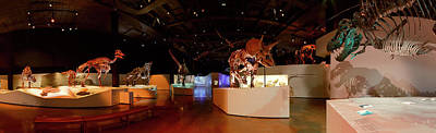 Photograph - Hall Of Paleontology by Tim Stanley