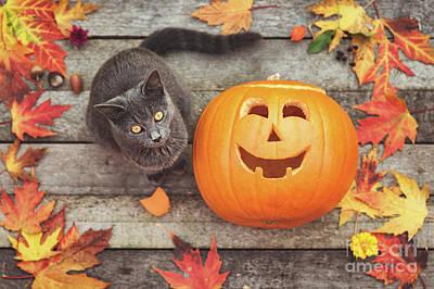 Cat Wood Carving Photograph - Halloween Cat by Gelner Tivadar