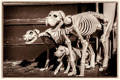 Photograph - Halloween Hounds Of Hell by LeeAnn McLaneGoetz McLaneGoetzStudioLLCcom