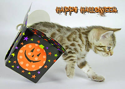 Photograph - Halloween Kitty by Shoal Hollingsworth