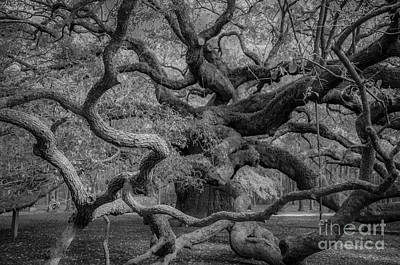Photograph - Halloween Oak by Dale Powell