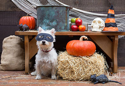 Apple Photograph - Halloween Party Dog by Edward Fielding