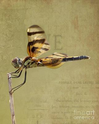 Celithemis Eponina Photograph - Halloween Pennant Dragonfly by TN Fairey