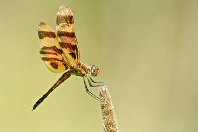 Photograph - Halloween Pennant by Linda Shannon Morgan