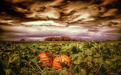 Photograph - Halloween Pumpkins  by Debra Forand