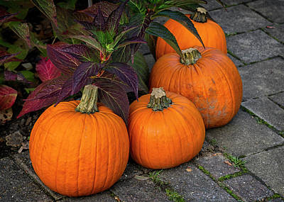 Photograph - Halloween Pumpkins L by Shirley Mitchell