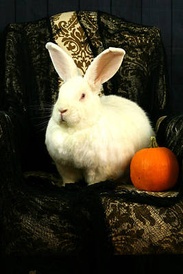 Photograph - Halloween Rabbit by Amanda Stadther