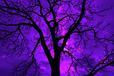 Winter Animals Rights Managed Images - Halloween Trees no 1 Royalty-Free Image by DM Carpenter