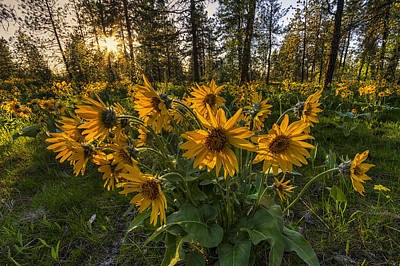 Photograph - Hamblen Park Sunshine by Mark Kiver