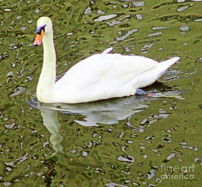 Photograph - Hamburg Swan 1 by Randall Weidner