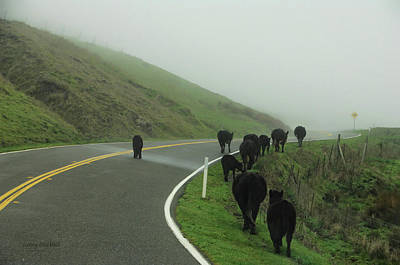 Cow Humorous Photograph - Hamburger Hill by Donna Blackhall