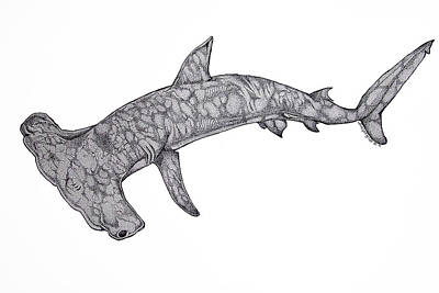 Hammer Head Shark Art Print by Nick Gustafson