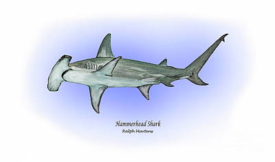 Reef Shark Drawing - Hammerhead Shark by Ralph Martens