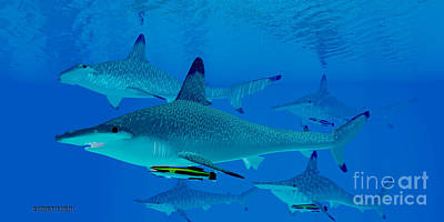 Hammerhead Shark Digital Art - Hammerhead Sharks by Corey Ford