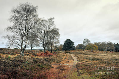 Hampshire Landscape Art Print by Svetlana Sewell