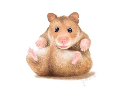 Hamster Drawing - Hamster by Florence Lee