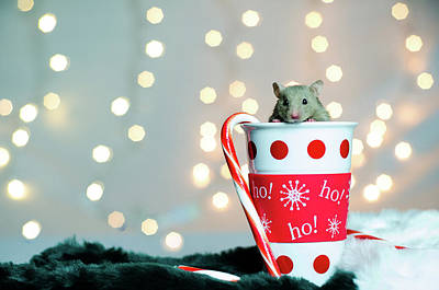 Photograph - Hamster For The Holidays by Tammy Ray