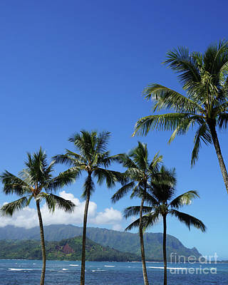 Photograph - Hanalei Bay Palms by Loriannah Hespe
