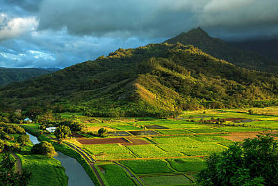 Photograph - Hanalei Valley Taro Fields by James Eddy