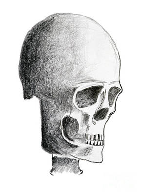 Human Skull Drawing - Hand Drawing Of The Skull - Pencil On Paper by Michal Boubin