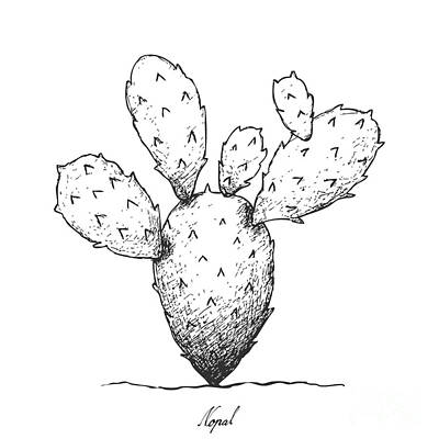 prickly pear cactus drawings fine art america
