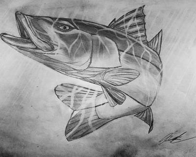 Hand Drawn Snook  Art Print by Nicholas James