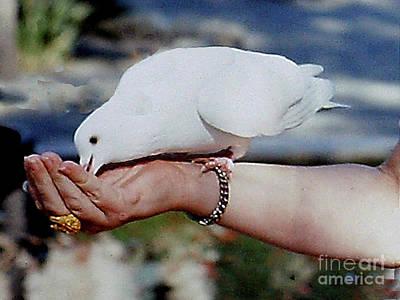 Photograph - Hand Feeding A White Dove At Mission Santa Barbara by Merton Allen