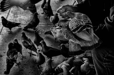 Photograph - Hand Feeding by James David Phenicie