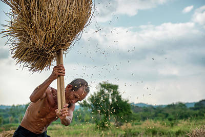 Lee Craker Royalty-Free and Rights-Managed Images - Hand Harvesting Rice 1 by Lee Craker