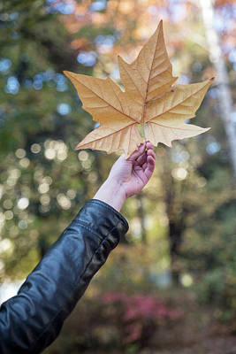 Photograph - Hand Holding Orange Colored Fall Leaf Against Tree by Julian Popov