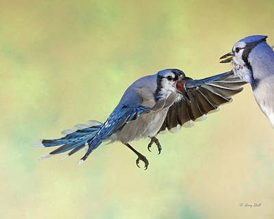 Photograph - Speak Beak by Gerry Sibell