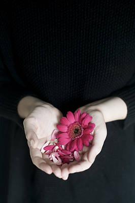 Photograph - Hands Holding Pink Gerbera Daisies by Di Kerpan
