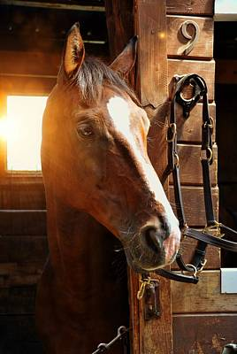 Photograph - Handsome Cash by Jamart Photography
