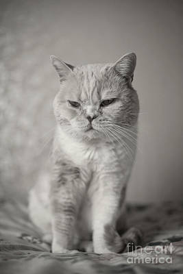 Photograph - Handsome Cat by Aiolos Greek Collections