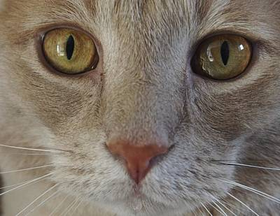 Photograph - Handsome Cat Face by Patricia McKay