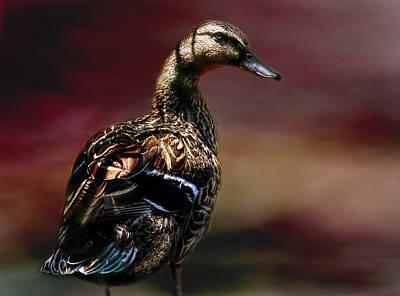 Handsome Duck Art Print