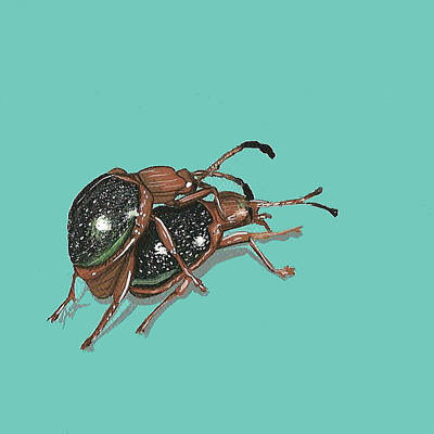 Handsome Fungus Beetles Art Print