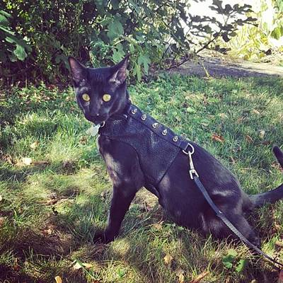Steampunk Photograph - Handsome Man Striking A Pose by Sirius Black Adventure Cat