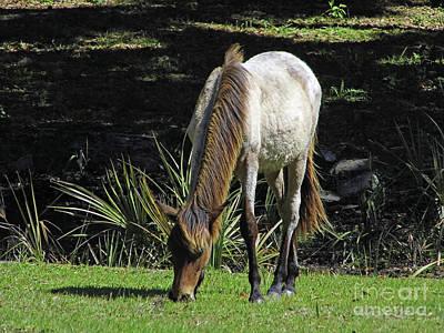 Photograph - Handsome Stallion by D Hackett