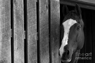 Photograph - Handsome T by Angela Rath