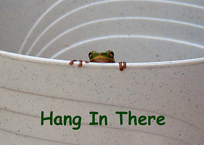 Photograph - Hang In There by Kathy K McClellan
