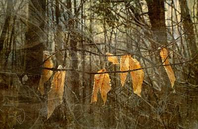 Photograph - Hangers On by Jim Vance